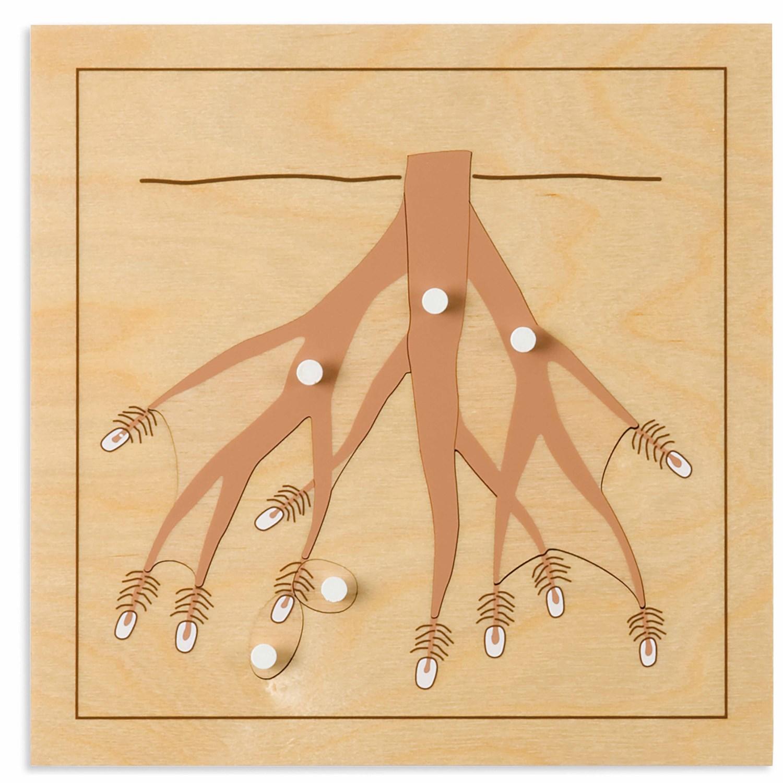 Puzzle Botânica: Raiz - Nienhuis Montessori