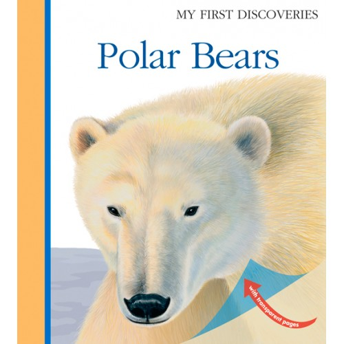 Urso Polar - My First Discoveries