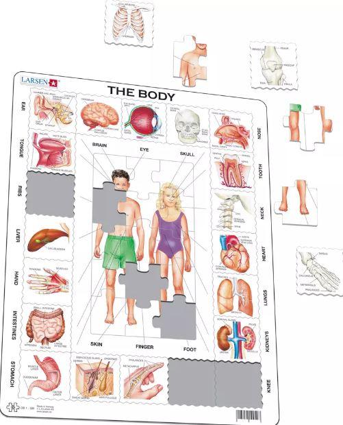 O Nosso Corpo Puzzle de Peças - Larsen