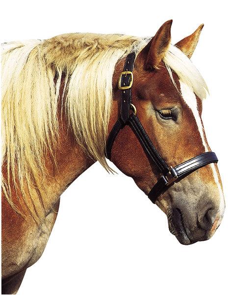Cabeção para Cavalos de Tiro NORTON