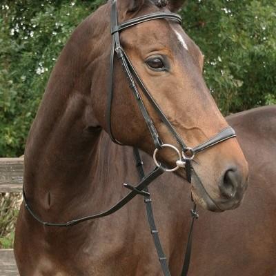 Cabeçada de Bridão HARRY'S HORSE