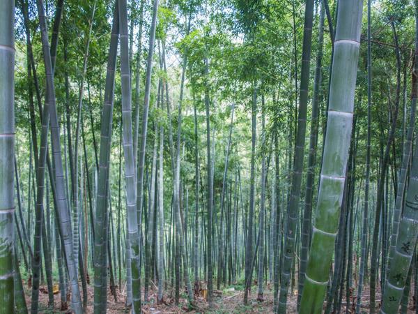 Escova de dentes bambu - Adulto