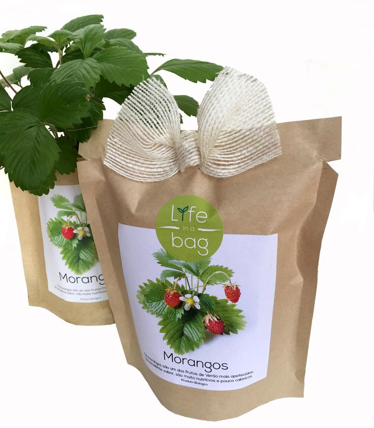 Grow Bag Morangos