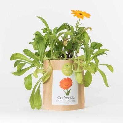 Grow Bag Calêndula