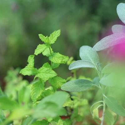 Workshop e oficina sobre plantas aromáticas e medicinais, produção e uso.