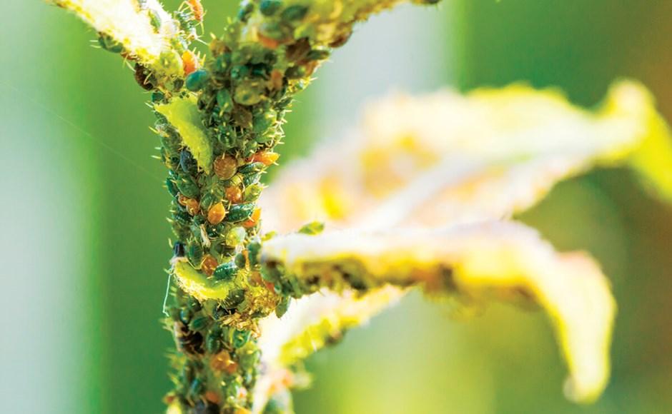 Plantas enfermas: cómo obtener el mejor diagnóstico