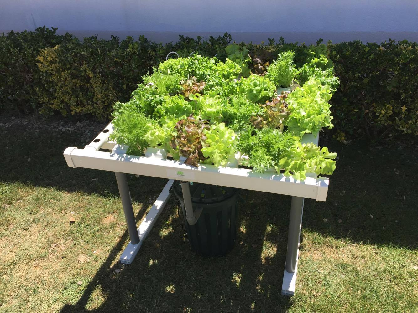 huerto en casa 60 plantas
