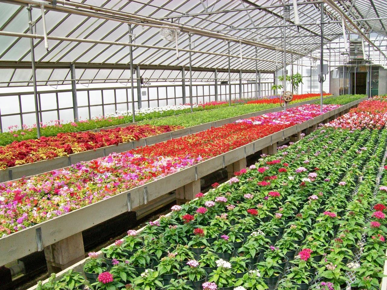 Flores Otro Beneficio Del Cultivo Hidroponico Hidroponia Espana I - Cultivo-hidroponicos