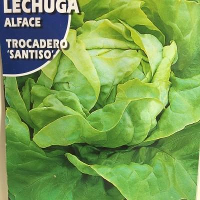 Lechuga Trocadero