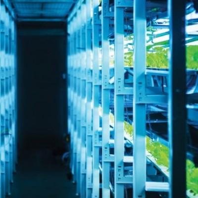 Planeando un buen sistema de iluminación en tu invernadero