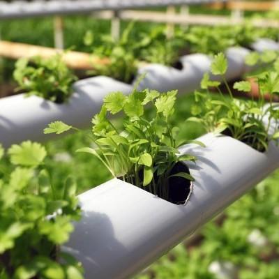 Curso Online - Plantas Medicinales y Condimentares