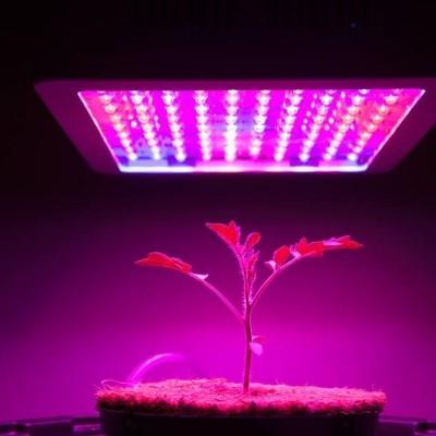 ¿Cómo la luz afecta el crecimiento de las plantas?