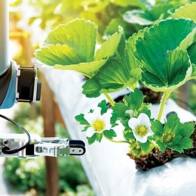 Top High-Tech para Invernaderos