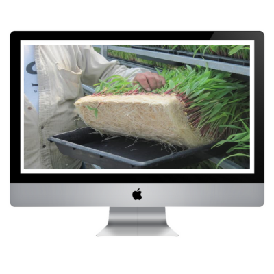 Curso Online - Forraje Verde Hidropónico