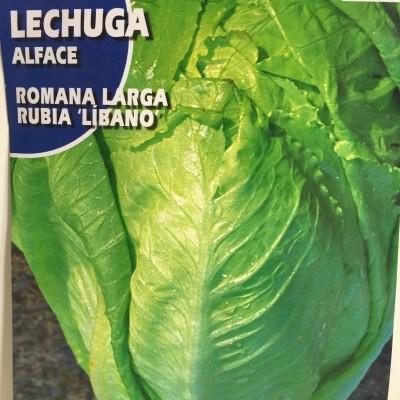 Lechuga Romana