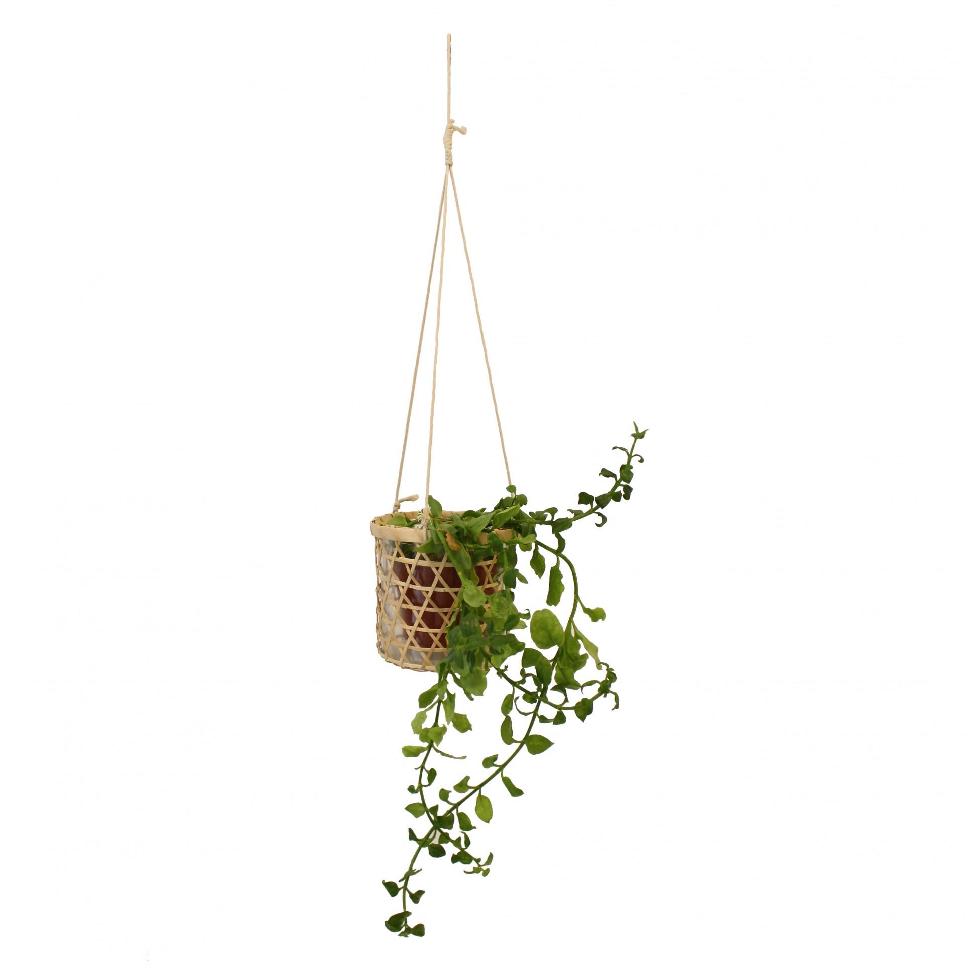 Vaso de vidro suspenso, Ø16x16 cm