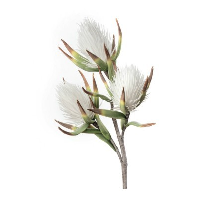 White Callistemon