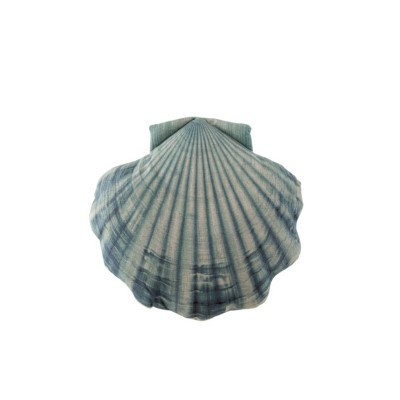 Almofada Shell