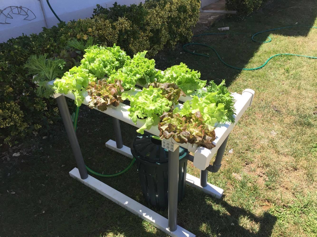 horta caseira 30 plantas
