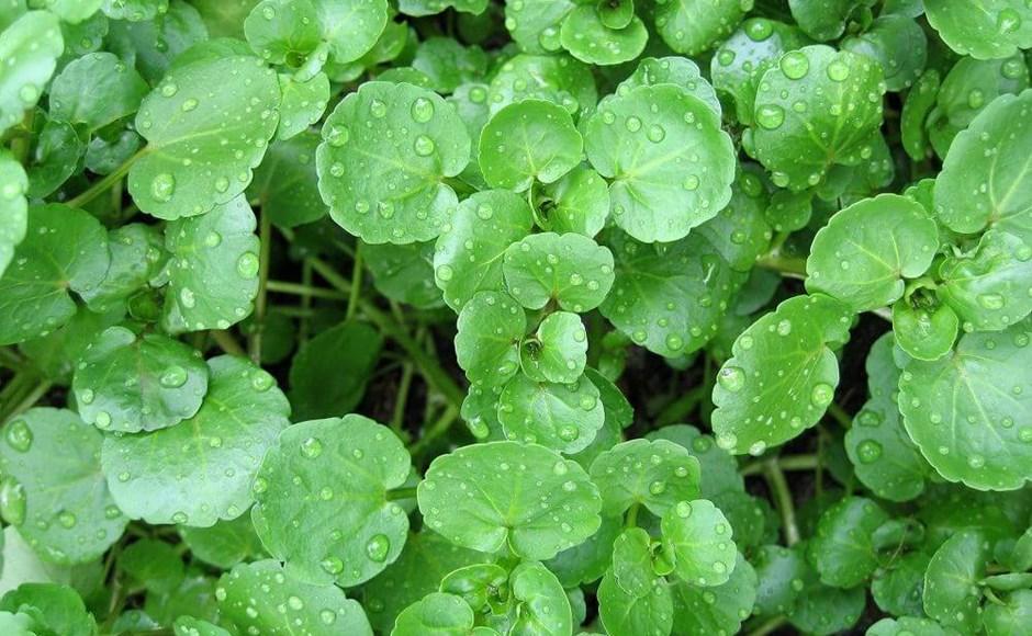 Cultivar plantas aquáticas