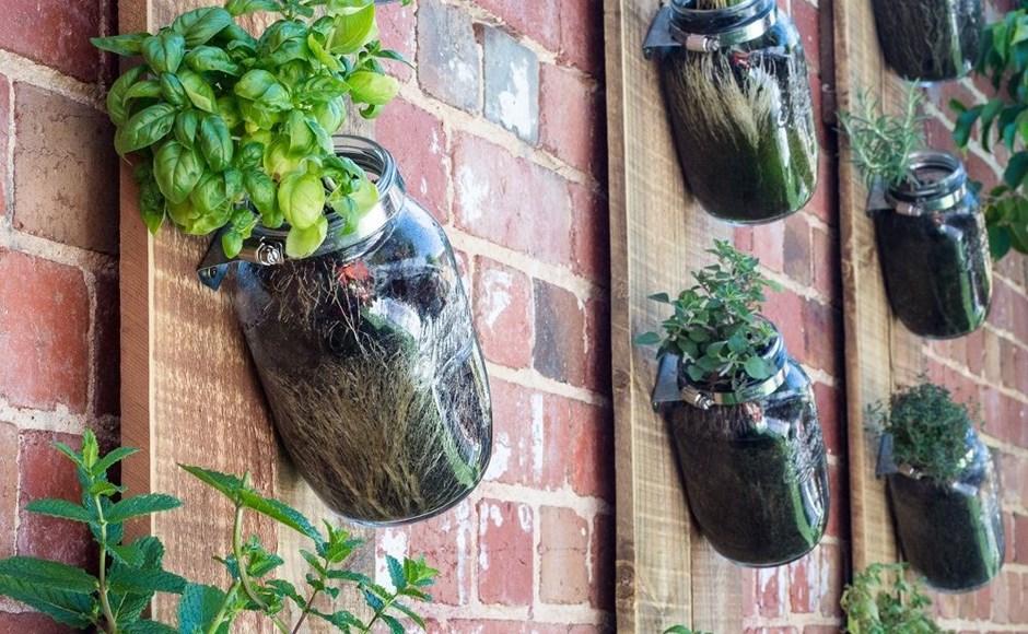 Hortas verticais: como criar paredes vivas de plantas comestíveis