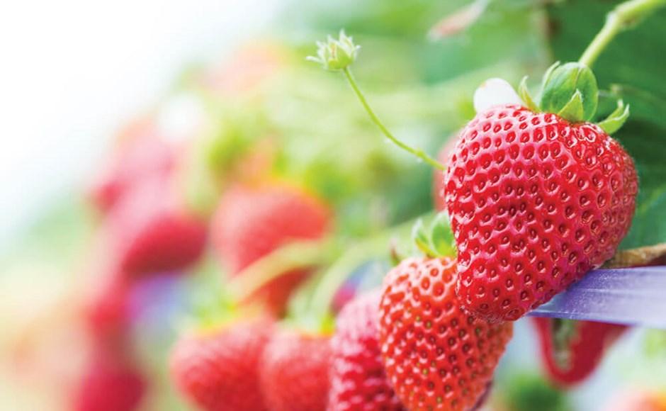 Nutrientes para frutificação