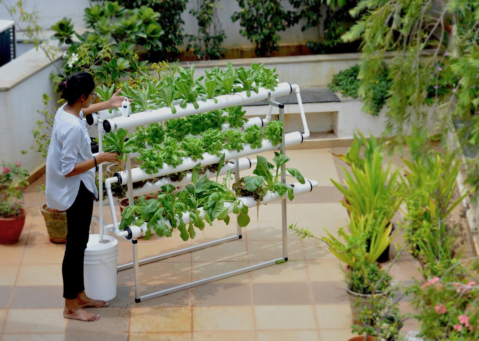 Cultivar em espaços pequenos