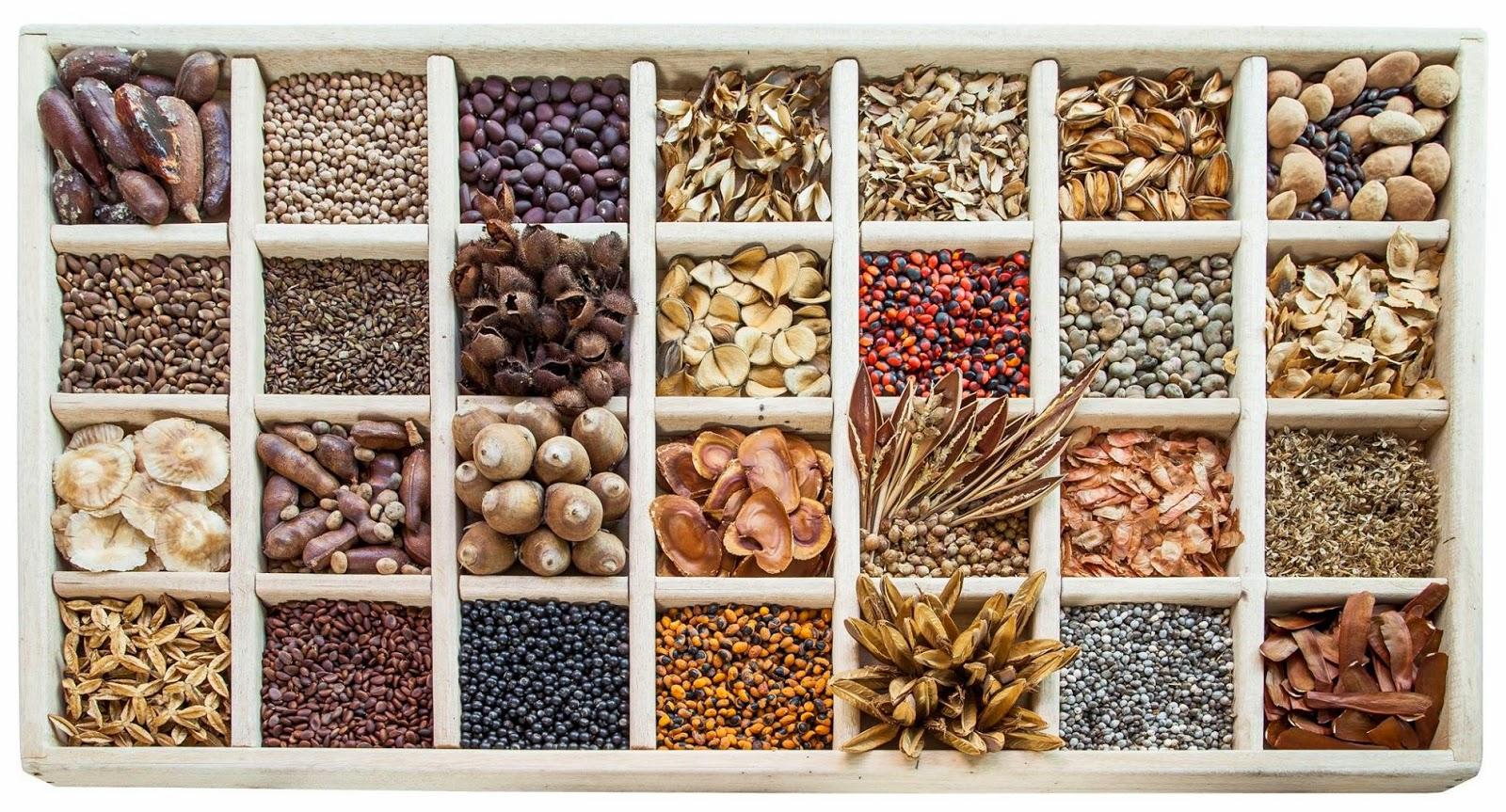 Conheça as suas sementes