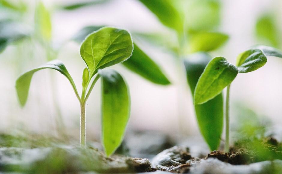 Cultivar com fibra de coco
