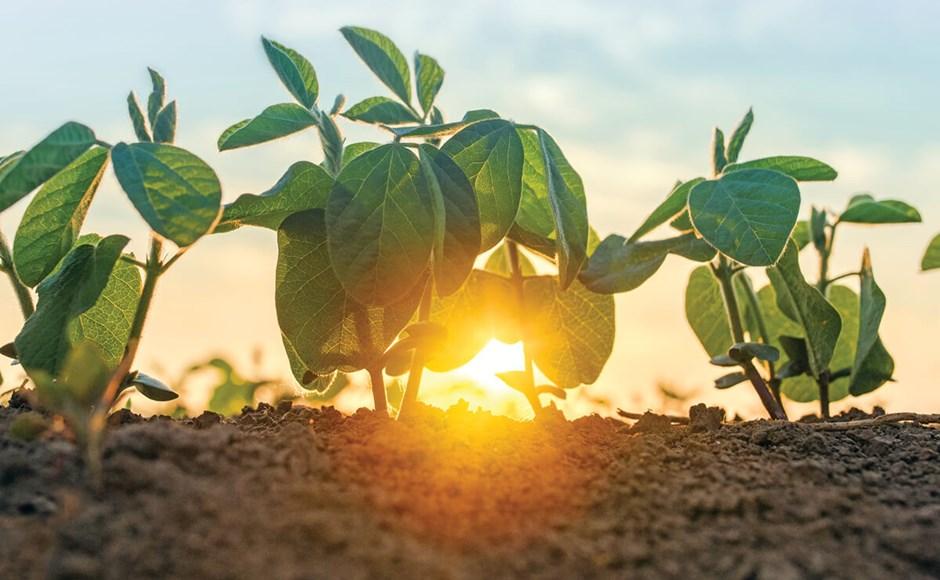 Como proteger as plantas do calor intenso