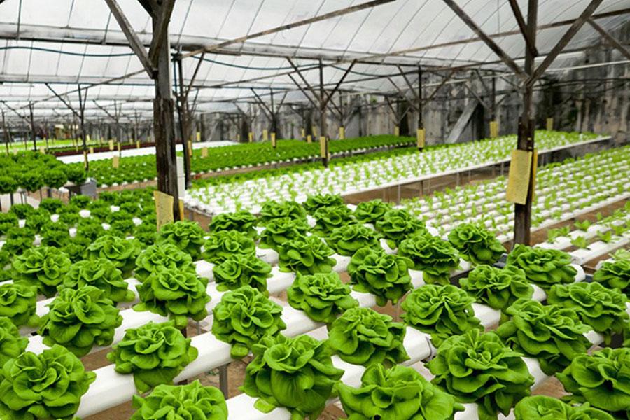 8 dicas para a produção de hortaliças