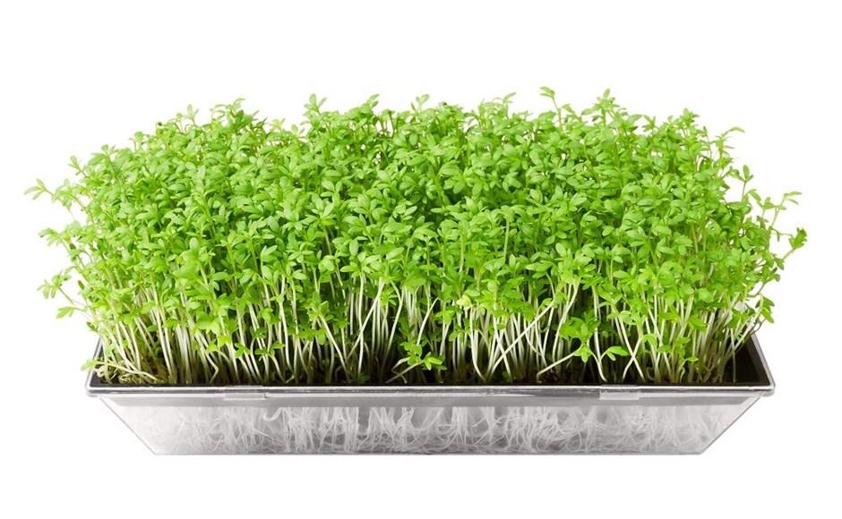 Microgreens - A micro revolução!