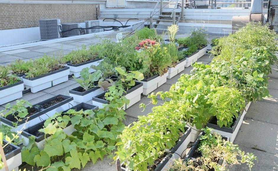 Guia para ter um jardim no terraço