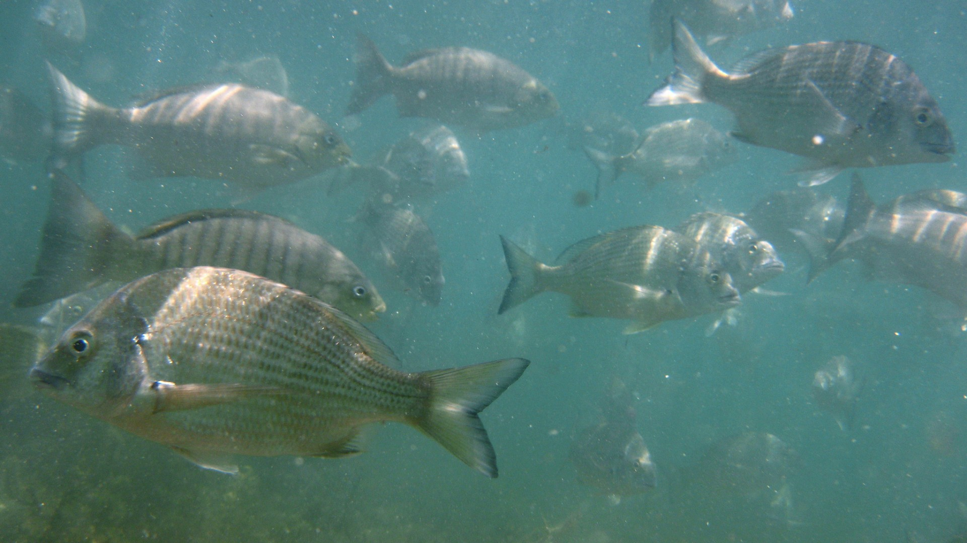 O que é a Aquaponia?