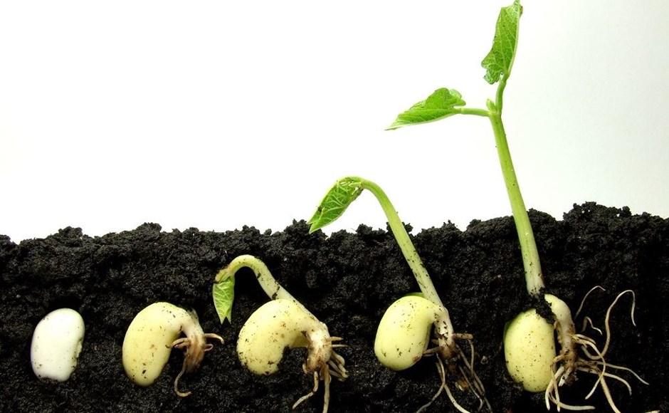 Germinar sementes e cuidar das mudas