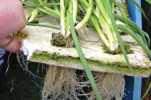 Floating Hidroponia