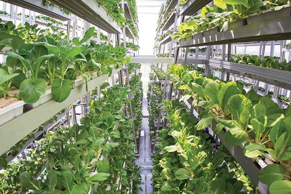 hortas verticais hidroponia