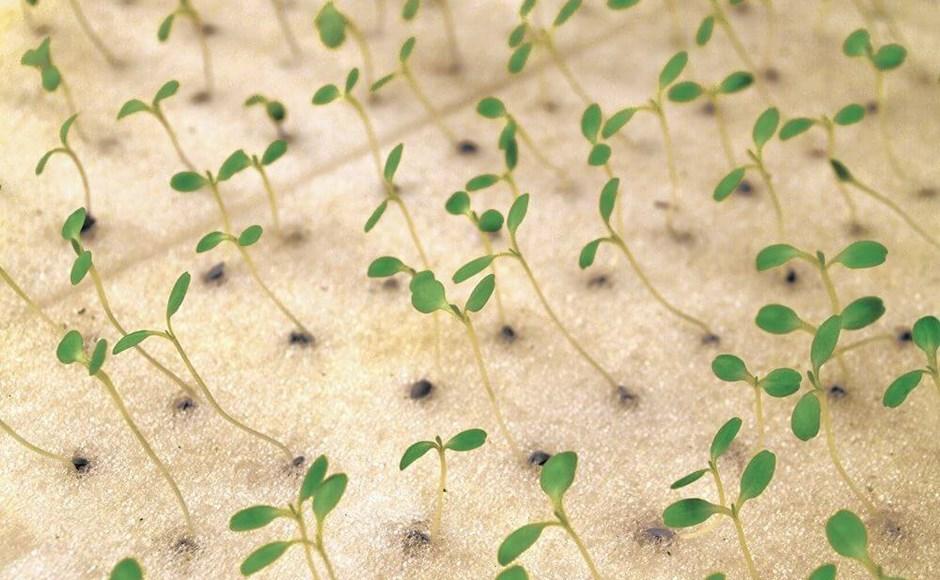 Transplantes saudáveis para colheitas felizes
