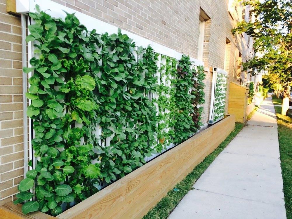 Como fazer uma horta em hidroponia?
