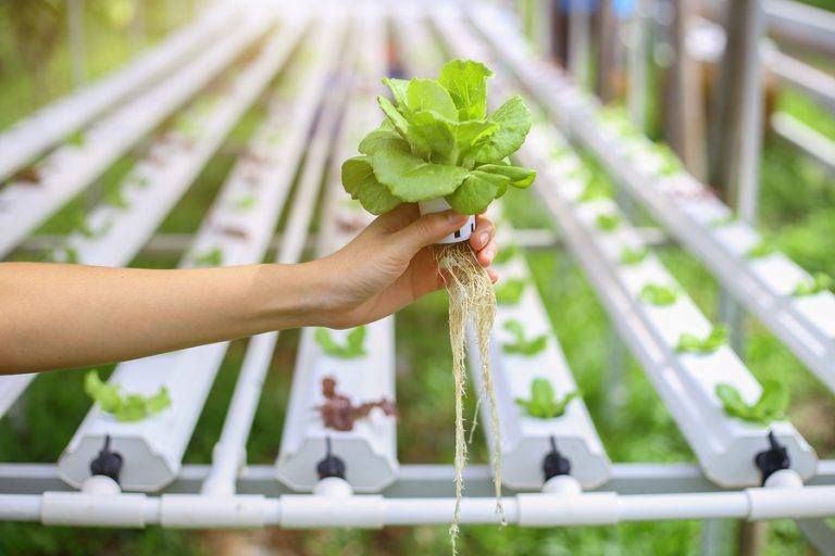Curso online hidroponia solu o nutritiva hidroponia - Jardin hidroponico ...