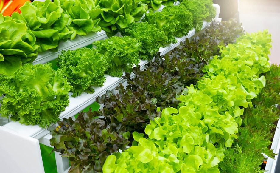Como a agricultura sem solo difere da agricultura baseada no solo