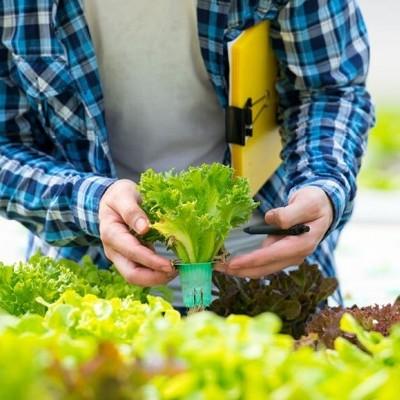 Reservatório de nutrientes: compreender o coração do sistema