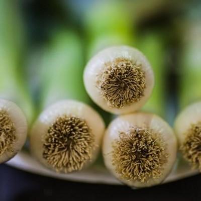 Cultivar Alho-Porro em Hidroponia