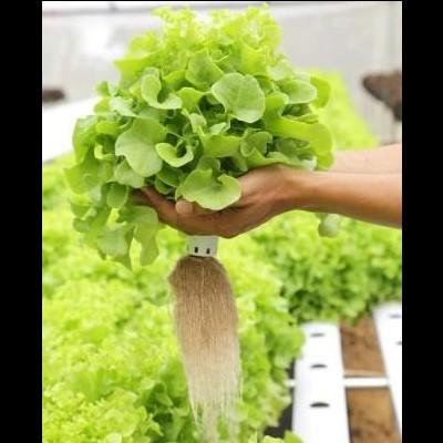 Nutrientes folhosas