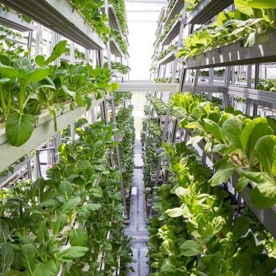 O que são hortas verticais, poderão elas alimentar o mundo?