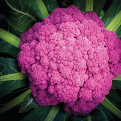 A beleza das Brassicas Hidropónicas