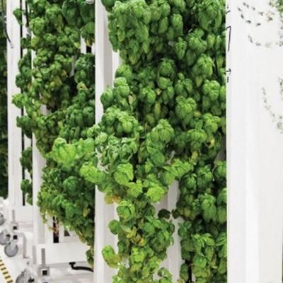 3 principais motivos para a falha das Hortas Verticais