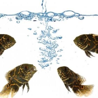 Como construir um Sistema em Aquaponia - Parte I