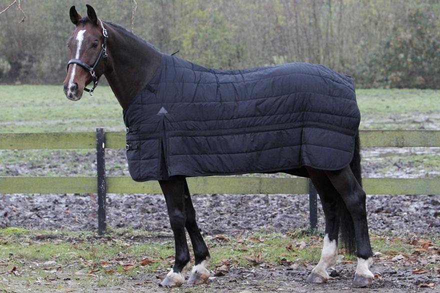 Cobrejão 200g, Harry's Horse