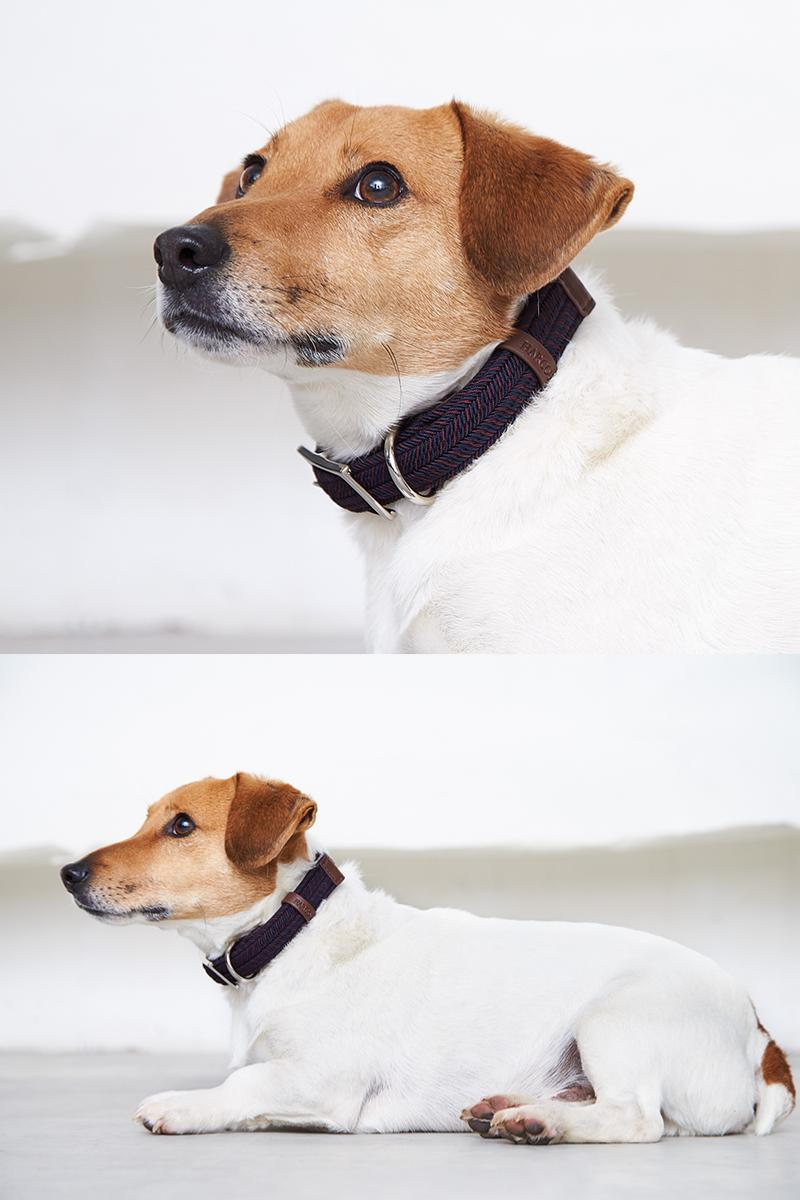 Joul coleira para cão, Harcour